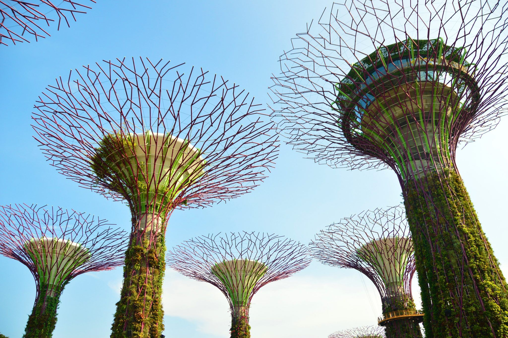 Super Trees in the Singapore Gardens by the Bay