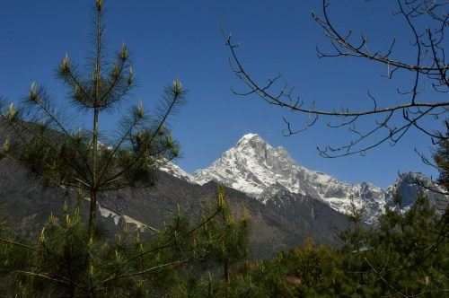 snow capped market through trees himalayas nepal