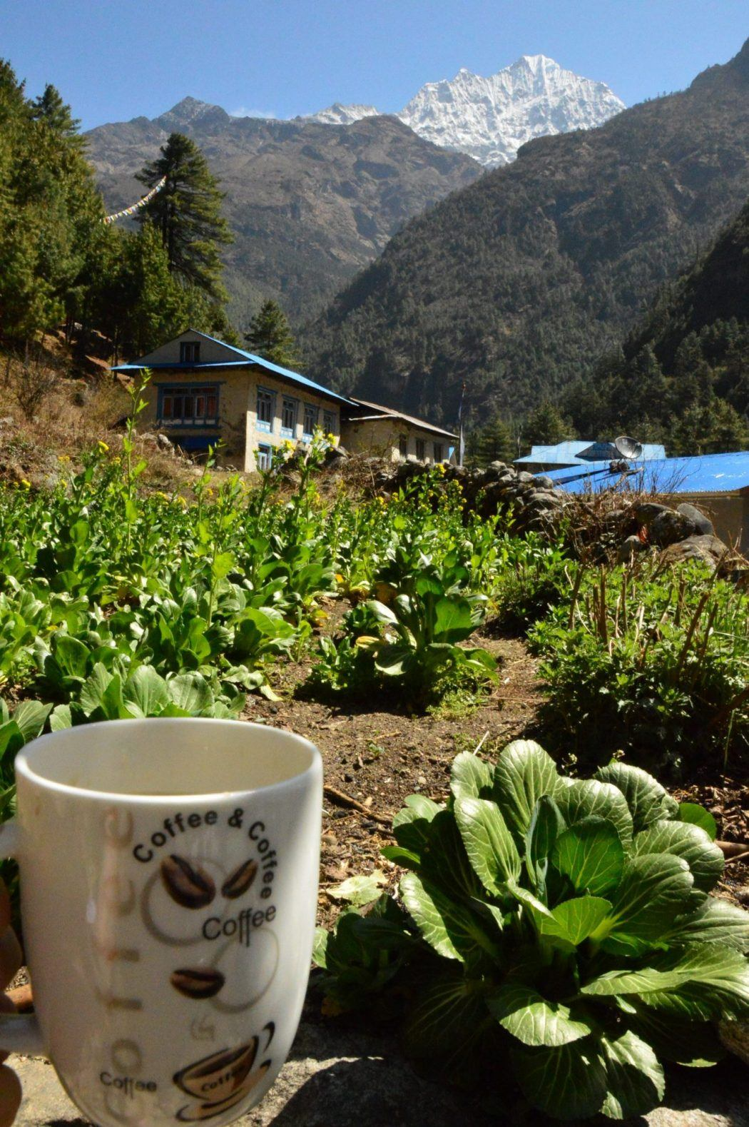 mug with plants and mountain in background everest base camp trek