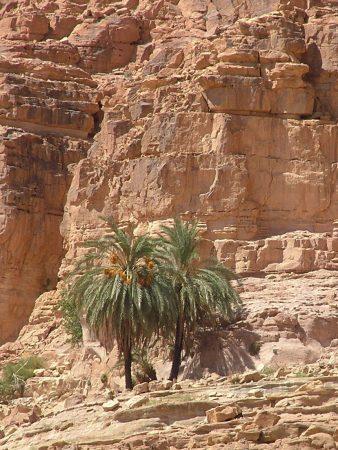 Palm Tree Twins