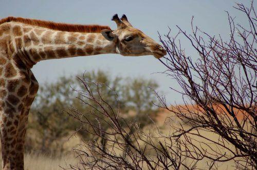 namibia-self-drive