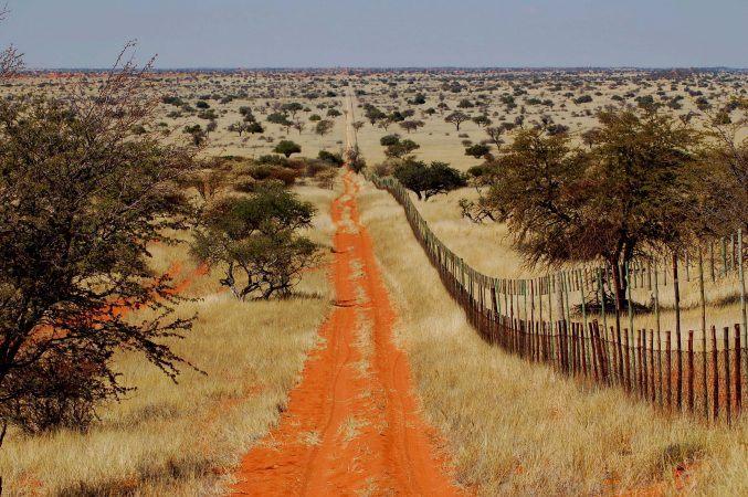 The endless roads of the Kalahari