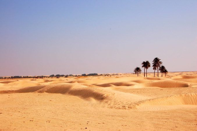 A few palm trees in the sahara