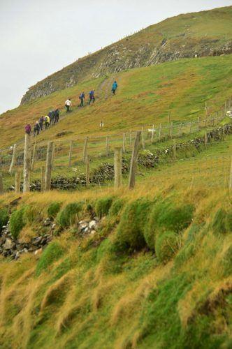 walk up grassy hill to dunmore head dingle peninsula ireland