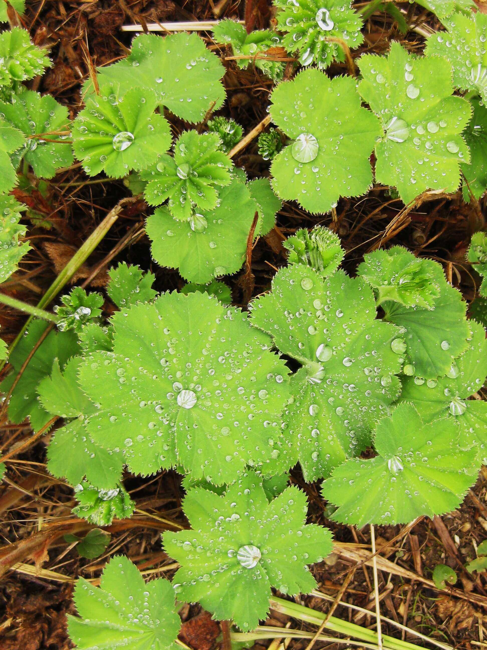 close up of leaves with raindrops monart spa ireland