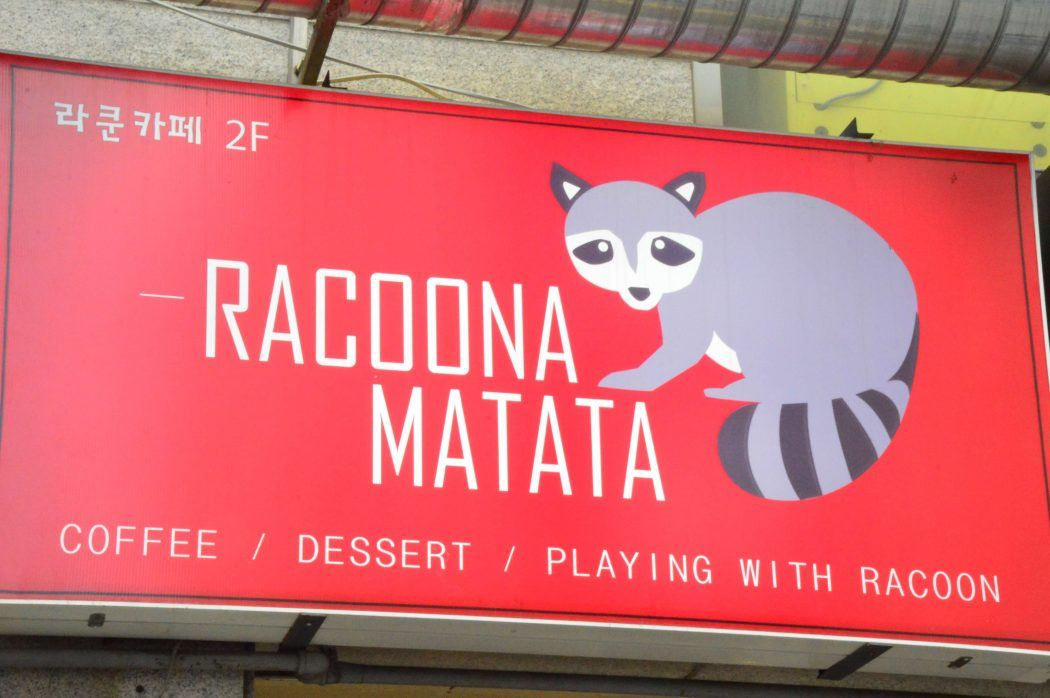sign for the raccoon cafe in daegu