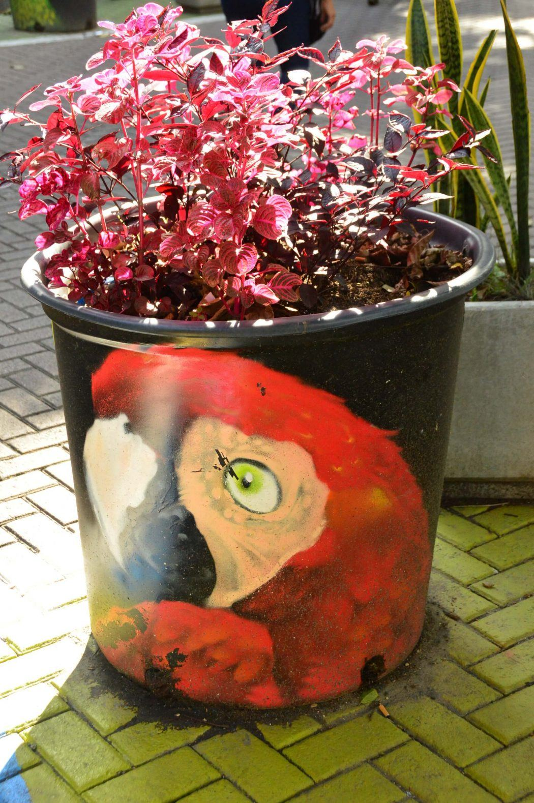 black pot with orange parrot and pink plant inside