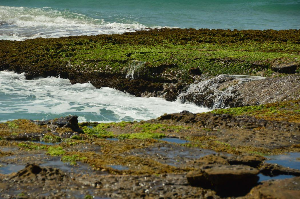 waves and rocks with moss up close