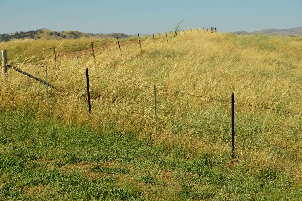 typical australia fields with a light fence