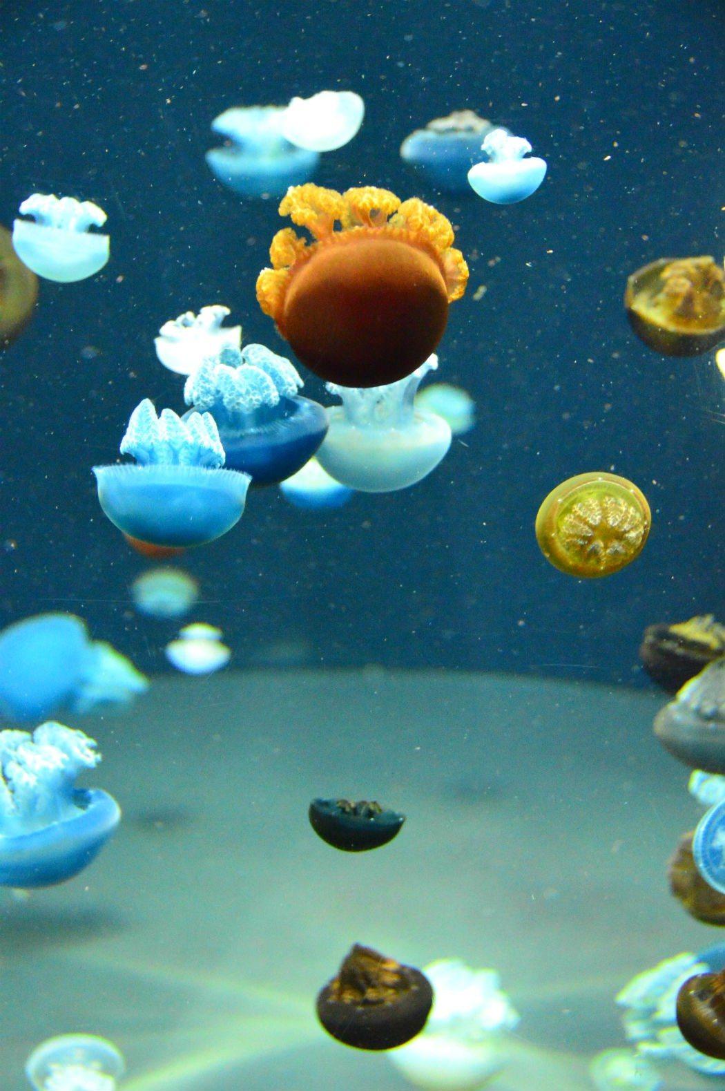 national aquarium star fish