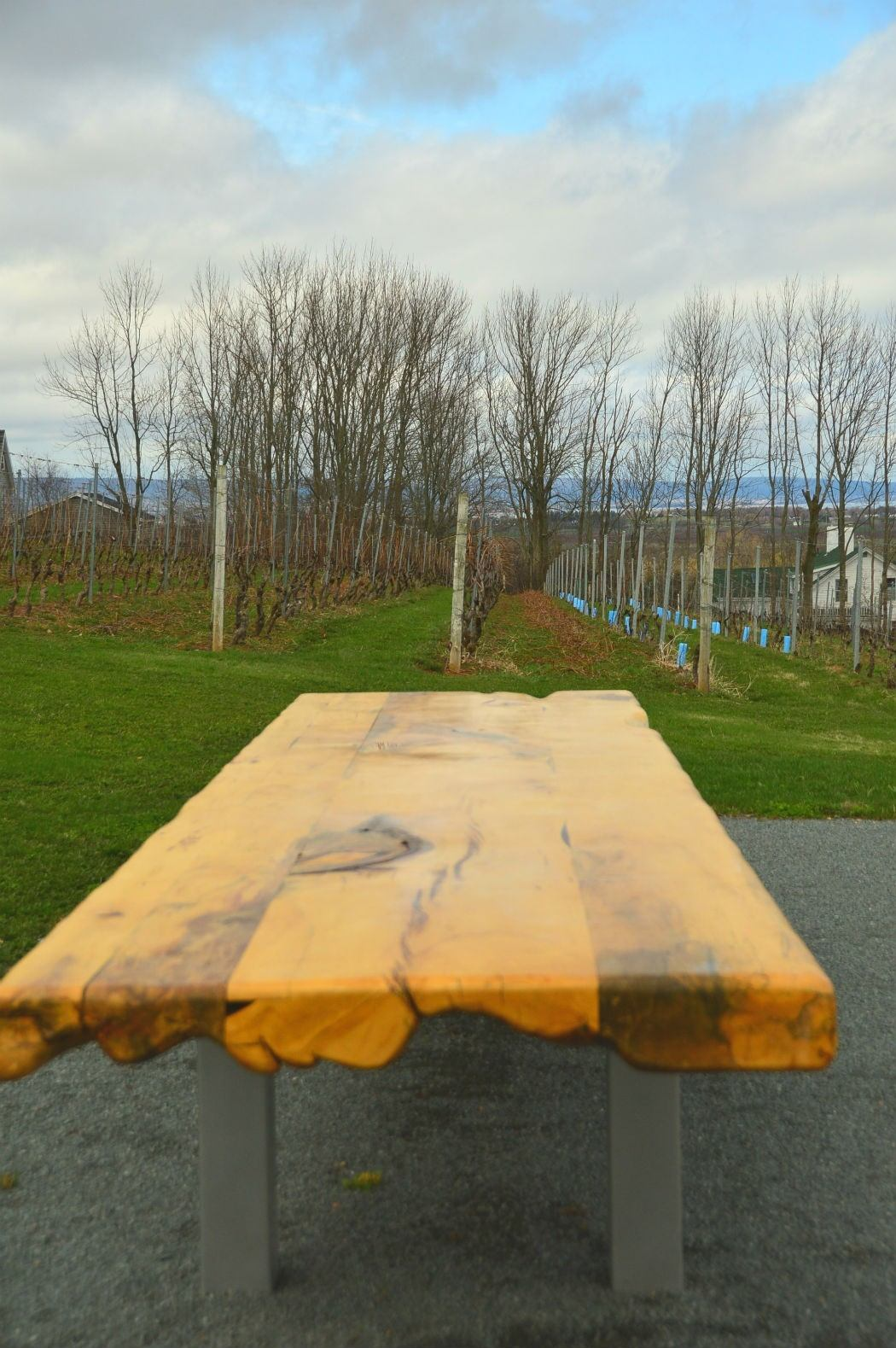 Bench in the vineyards of wolfville