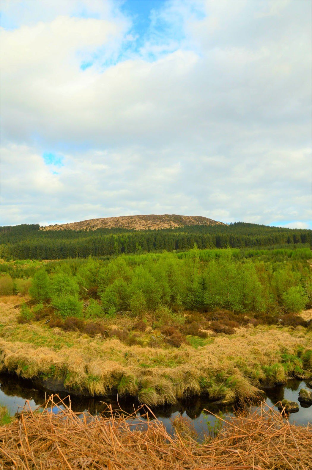 west coast scotland galloway forest park