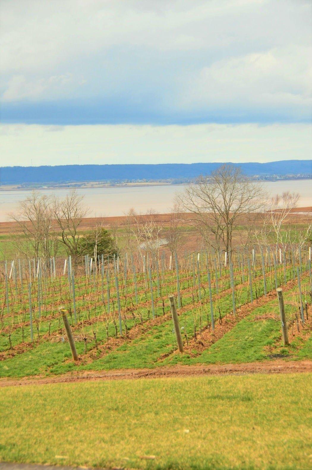 wolfville vineyards nova scotia
