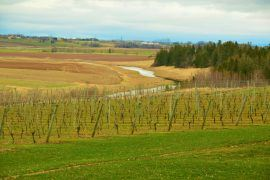 wineries in wolfville