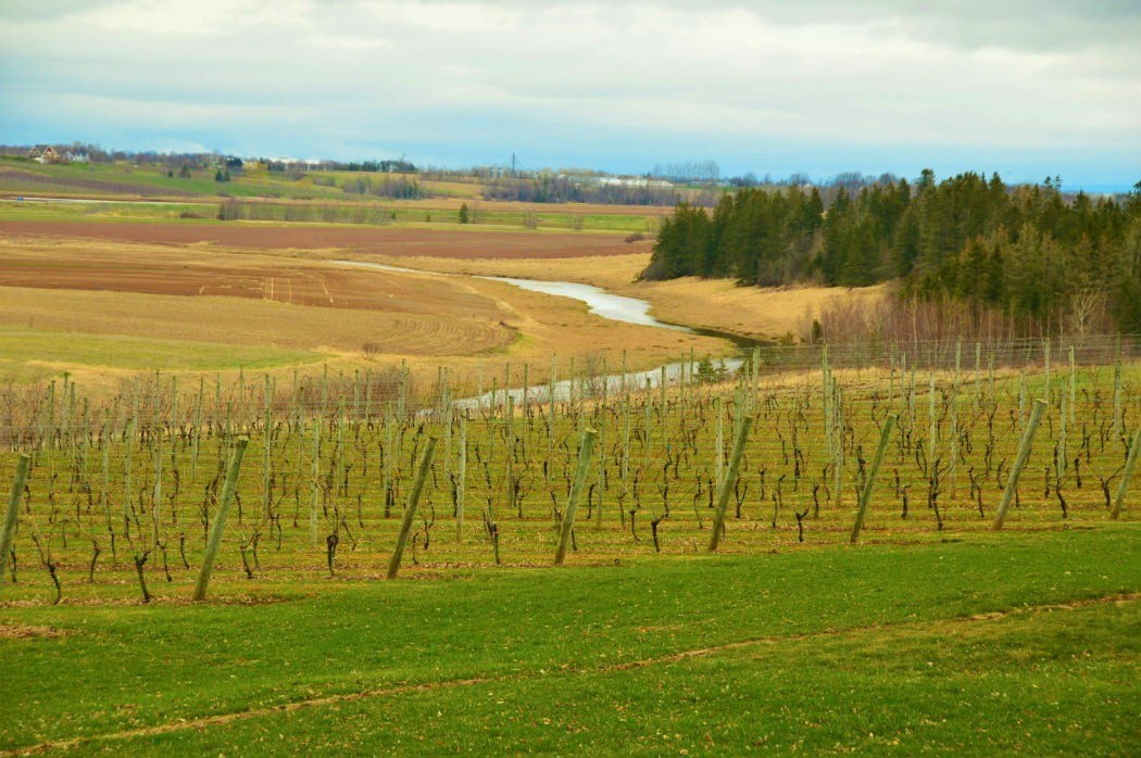 Wolfville Wineries - A Complete How-To Guide