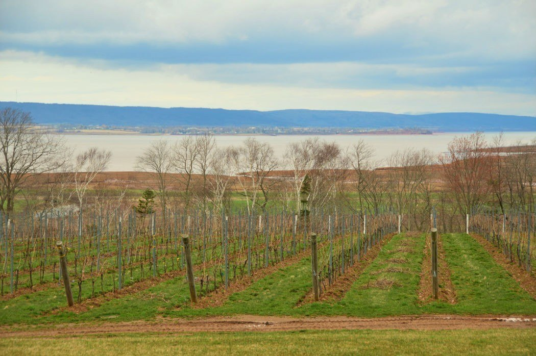 vineyards in wolfville nova scotia