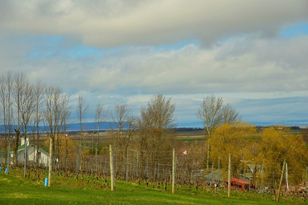 wolfville vineyards and fence