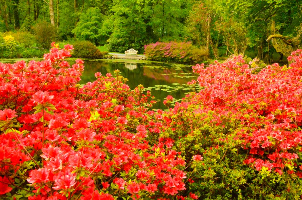 scottish garden with red flowers at Glenapp castle