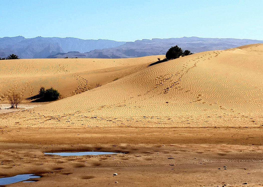 Dunes of Maspalomas Gran Canaria