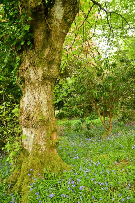 scottish gardens with bluebells at a spa