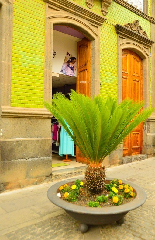 Palm on display in front of a shop