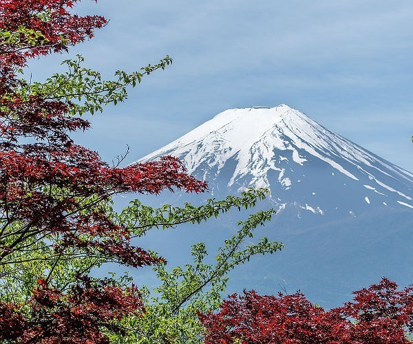 mount fuji framed by red and green leaves