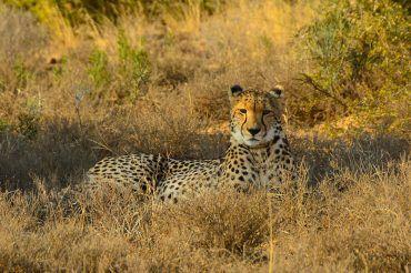 safarishirtwomens