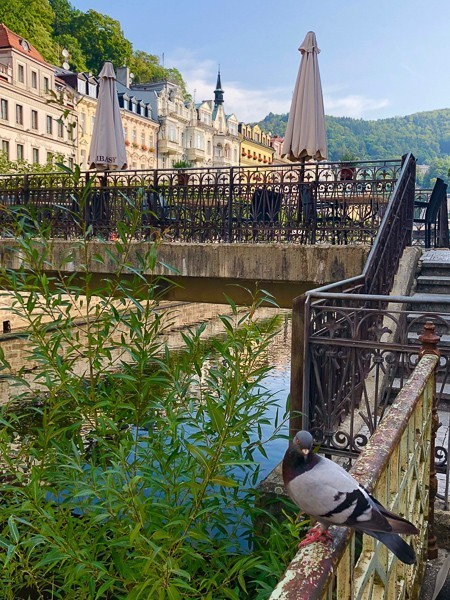 bird on railing on bridge with greenery and buildings behind