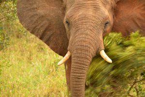 best camera for safari 1