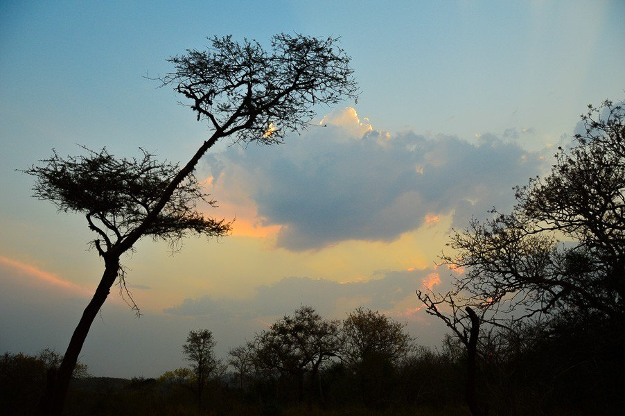 sunset in africa with trees in silhouette