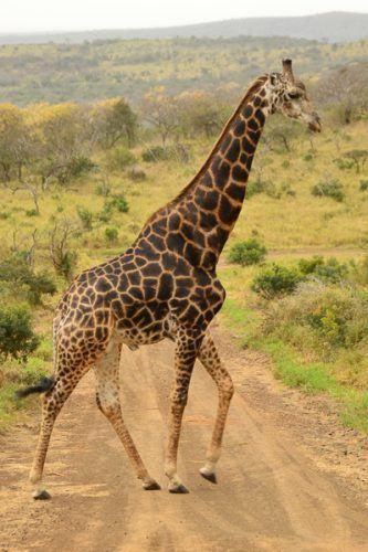 dslr camera for safari
