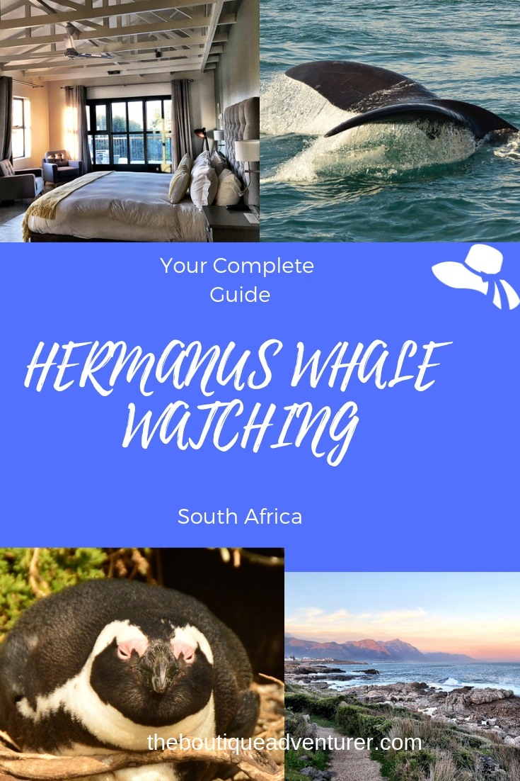 The different types of whale watching hermanus tours on offer, FAQs, what else to do in Hermanus, when to go, where to stay - Everything You need #hermanus #southafrica