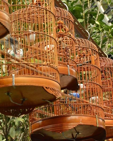hong kong mongkok bird market bird cages