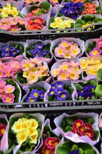 hong kong flower markets