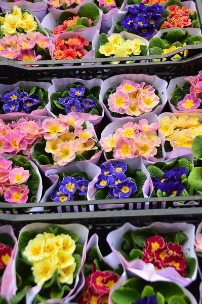 hong kong mongkok flower markets flowers