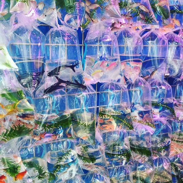 hong kong mongkok goldfish in bags