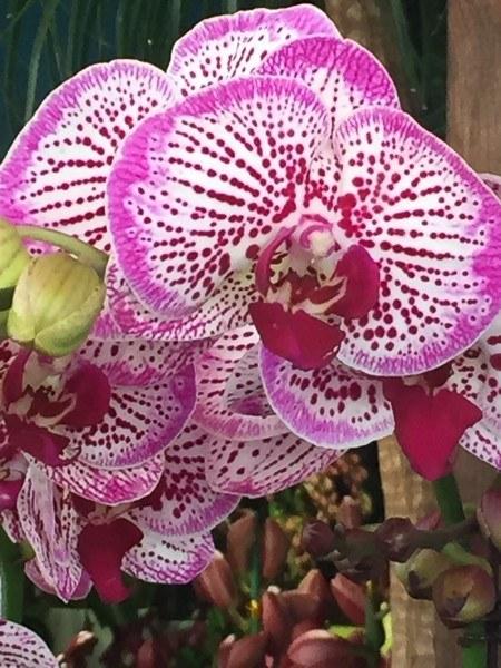 hong kong mongkok flower market orchids