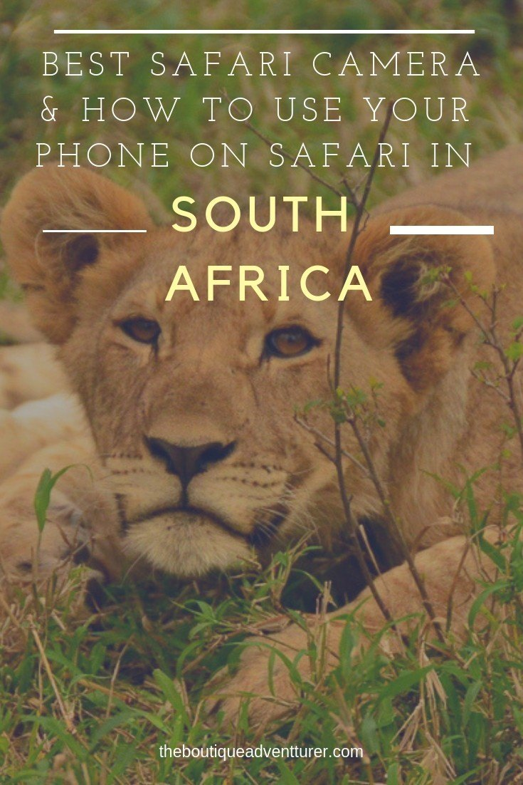 Looking for the best camera for safari? An African Photo Safari can be intimidating - here is my complete guide to the best camera options as well as how to get the most out of the camera on your phone when on Safari #safariphotos #safariphotography #safariphotographytips #safaricamera #safariphotosouthafrica #safariphotobigcats #safariafrican #safaritravel
