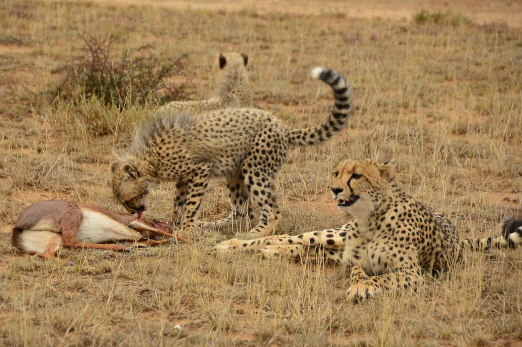 african safari honeymoon packages