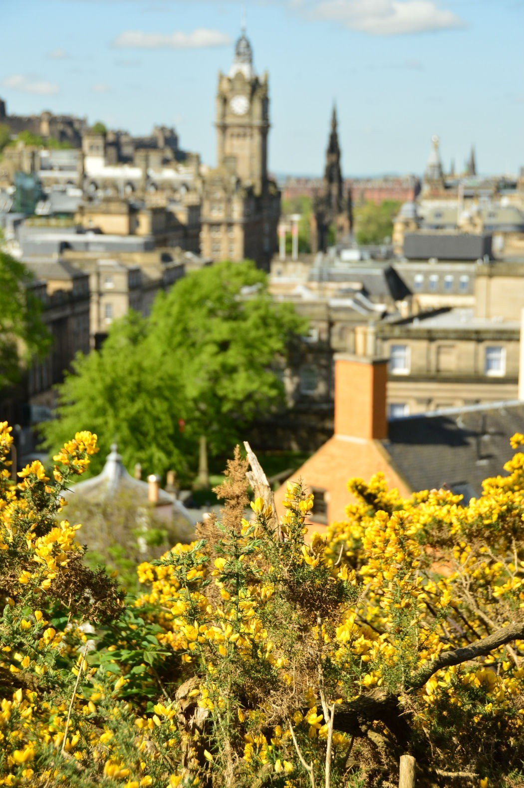 view over edinburgh with yellow flowers in the foreground