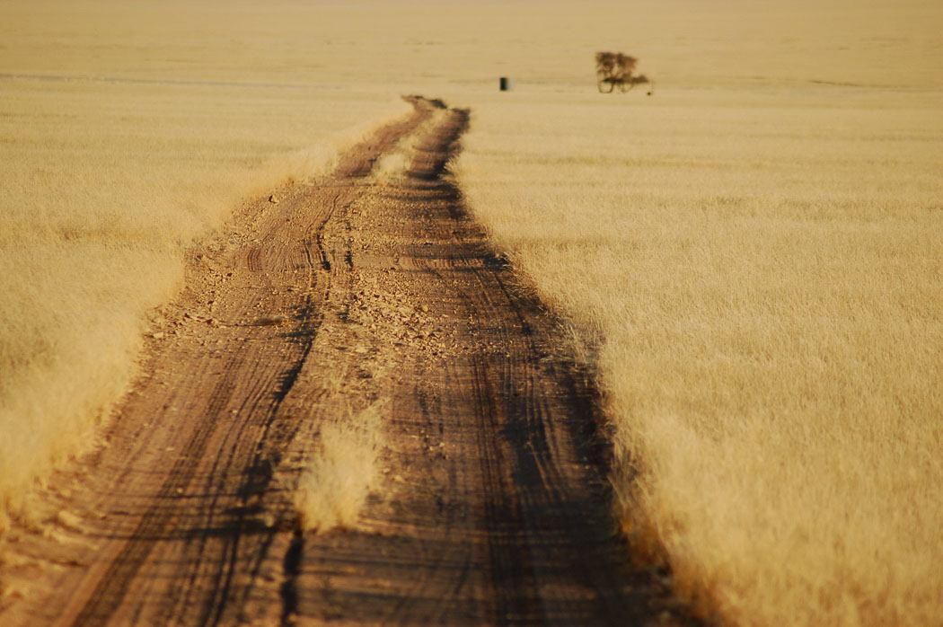 road through yellowed grass in namibia