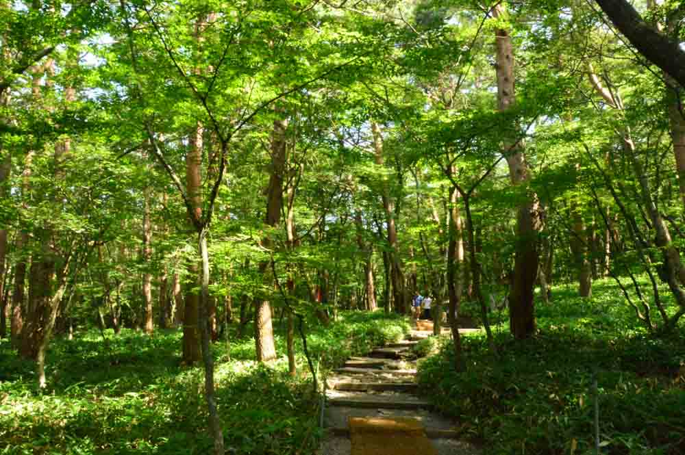 the start of the trail heading up Hallasan Jeju Island Korea
