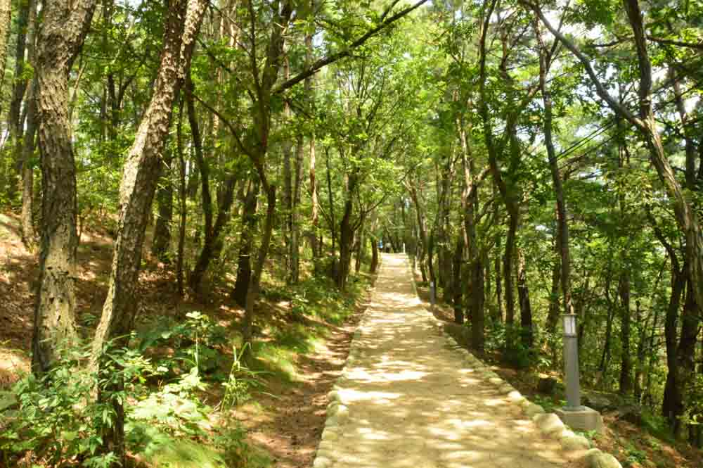 korea_daegu_apsan-moutain-path
