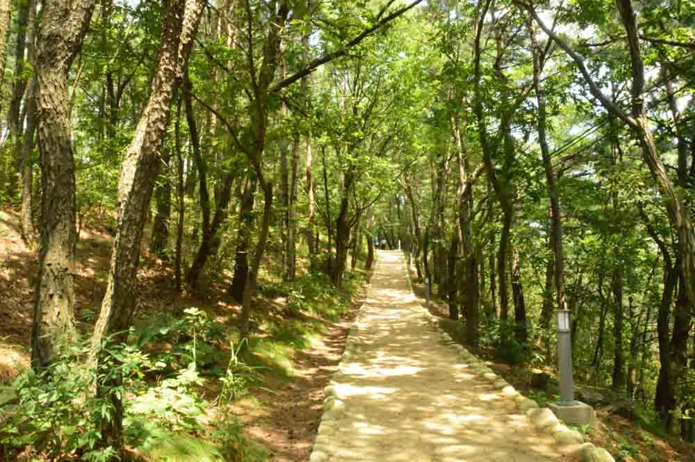 korea_daegu_apsan-moutain-path