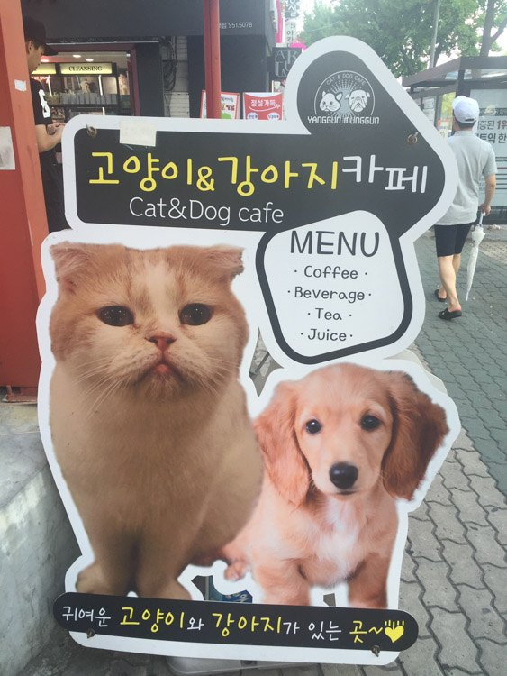 korea_daegu_cat-and-dog-cafe-sign
