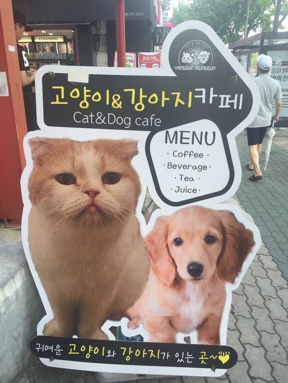 korea_daegu_cat-and-dog-cafe-sign
