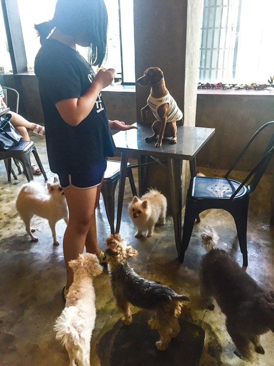 korea_daegu_cat-and-dog-cafe