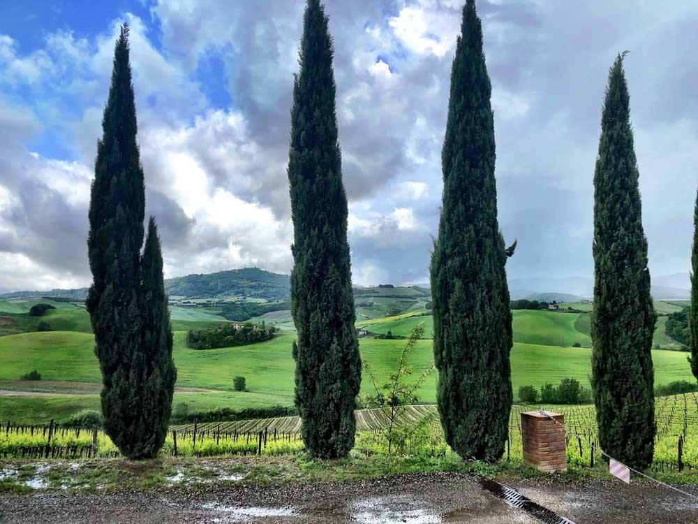 Italy_Montepulciano_cypress-trees