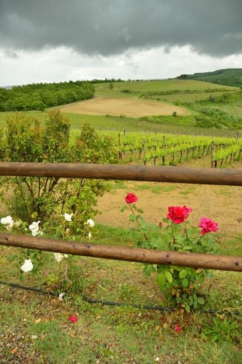 Italy_Montepulciano_vineyard-flowers