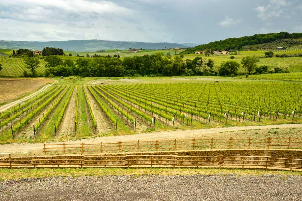 Italy_Montepulciano_vineyard